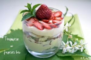 recette-tiramisu aux fraises bio-desserts